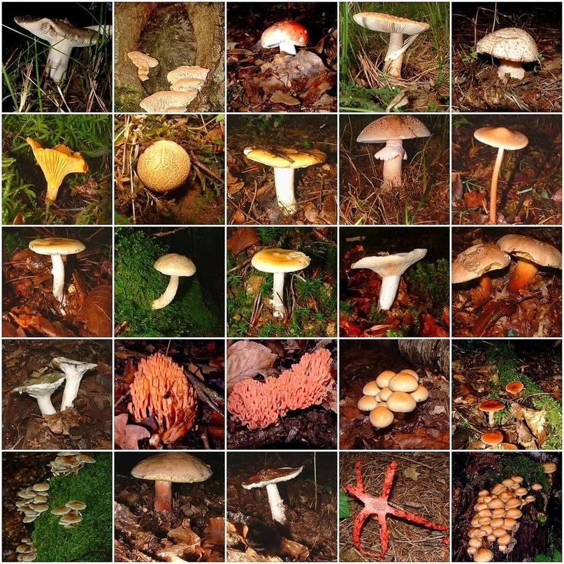 Грибы хищники примеры названия. грибы хищники как человек использует грибы хищники