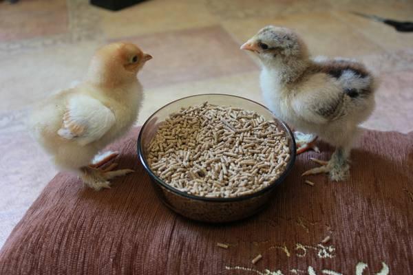 Тривитамин п для цыплят: инструкция по применению