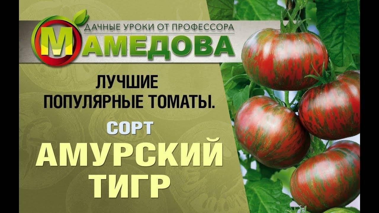 Томат розовый сибирский тигр: описание сорта, отзывы об урожайности, фото помидоров