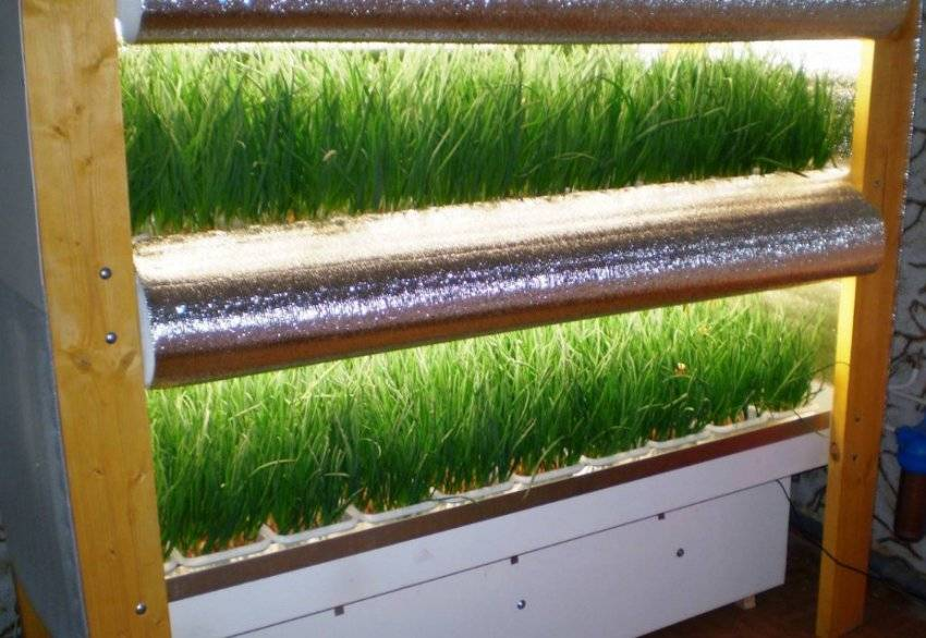 Особенности выращивания лука на гидропонике