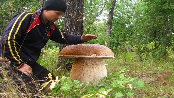 Как вырастить много белых грибов дома на подоконнике — простой способ от грибника со стажем (видео)