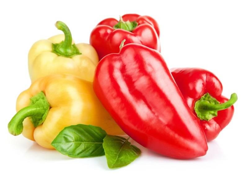 Перец богатырь — высокоурожайная культура с плодами весом до 200 г