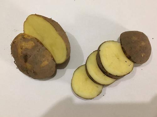 Картофель колобок: характеристика сорта, отзывы, вкусовые качества