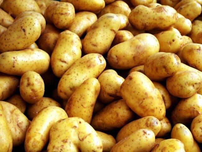 Сорта картофеля – выбираем самые урожайные и стойкие к заморозкам | спутниковые технологии