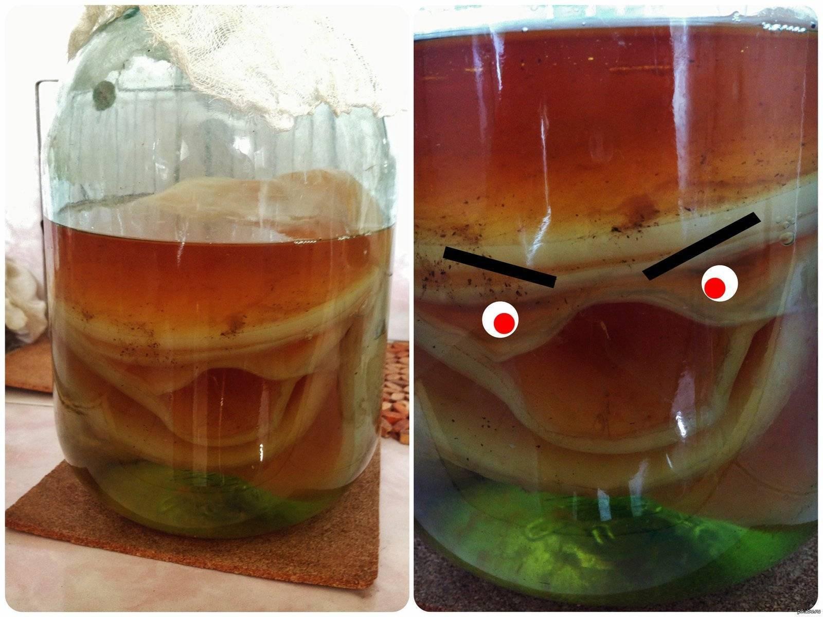 Польза и вред чайного гриба: это нужно знать каждому!