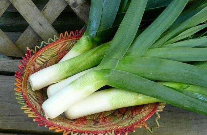 Март - время посеять богатый витаминами лук-порей