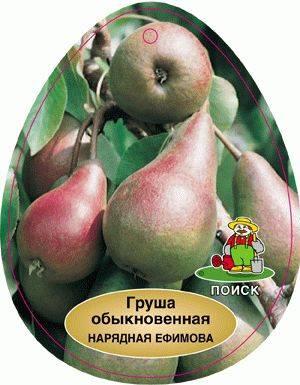 Особенности выращивания груши сорта нарядная ефимова - всёпродачу