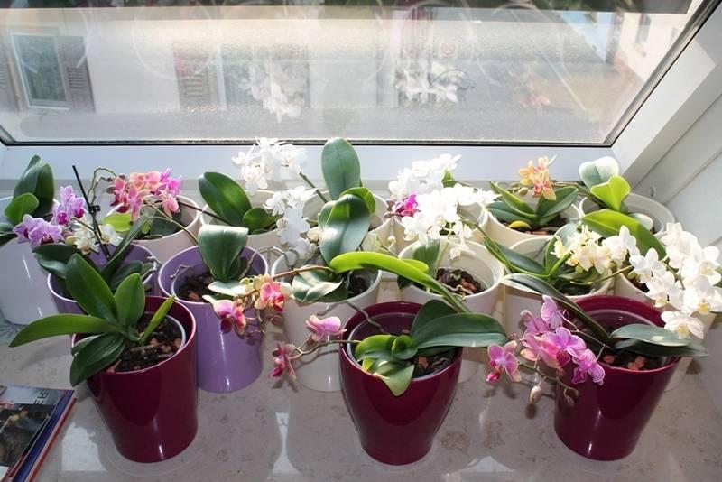 «серамис» для орхидей: что это такое? как использовать грунт? его состав и свойства. отзывы покупателей
