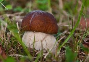 Где собирать грибы в томске, грибные места томской области?  - досуг и развлечения - вопросы и ответы