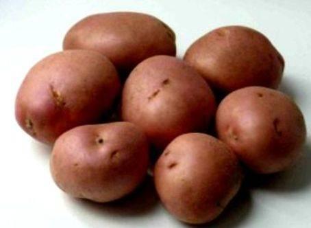 Парша на картофеле: как бороться, способы лечения