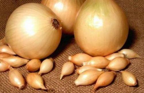 Лук купидо f1: описание голландского сорта, посадка и уход, выращивание севка, сбор и хранение урожая