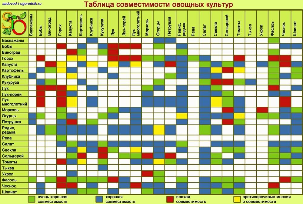 Соседство овощей на грядках: таблица совместимости растений