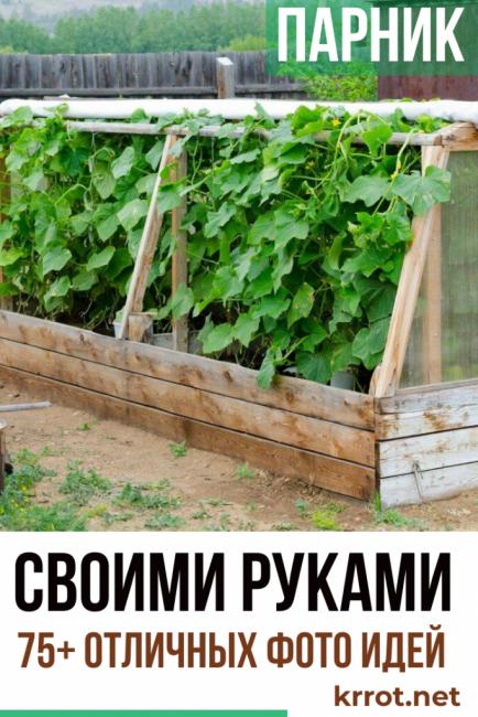 Секреты выращивания томатов в теплице из поликарбоната: весь процесс от а до я