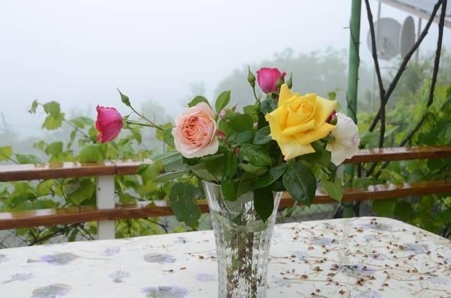 Как дольше сохранить срезанные розы в вазе: что добавить в воду, чтобы продлить им жизнь