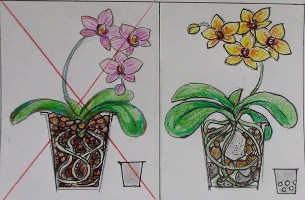 Почему не цветет орхидея и как заставить ее цвести в домашних условиях