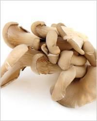 Какие грибы можно есть сырыми - полный список