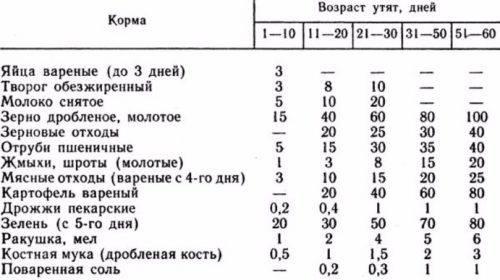 Содержание перепелов — диетические яйца и мясо при минимальном уходе. породы, условия, питание. фото — ботаничка.ru