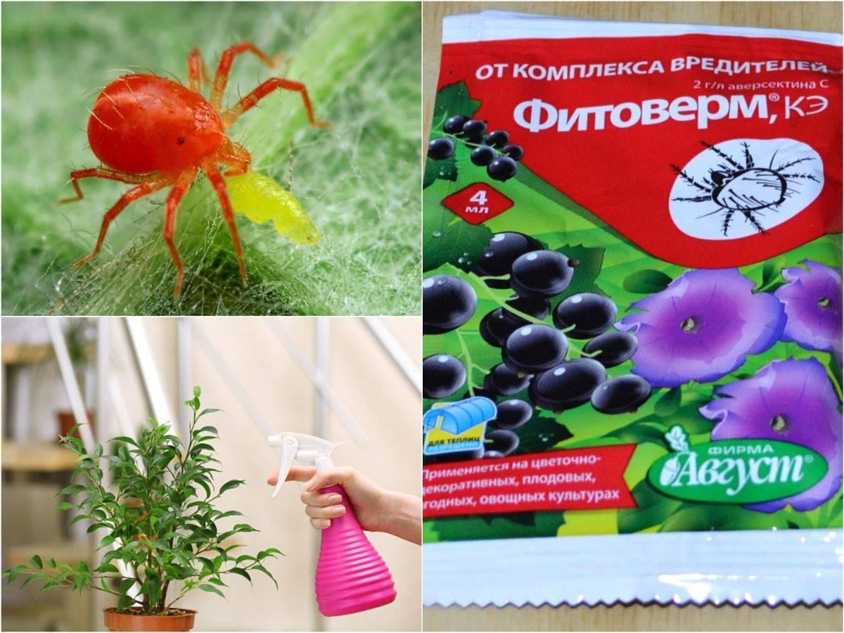 Фитоверм для огурцов: инструкция по применению в теплице и открытом грунте, как обработать раствором, отзывы