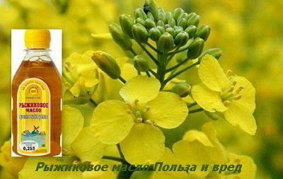 Рыжиковое масло: полезные свойства