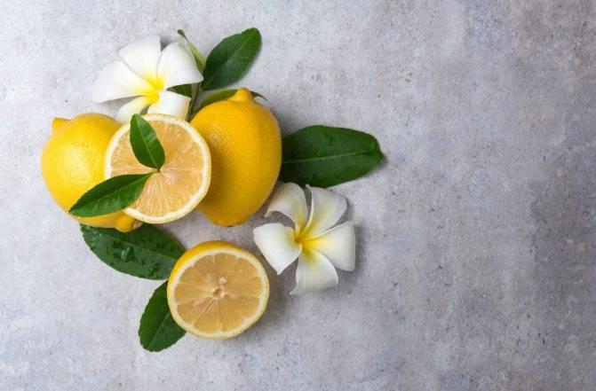 Можно ли при грудном вскармливании лимон: показания и как употреблять