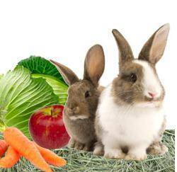 Чем кормить кроликов или кормление, здоровье и рентабельность 2021