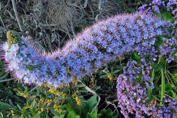 Медоносные многолетние растения для пчел: фото с названиями