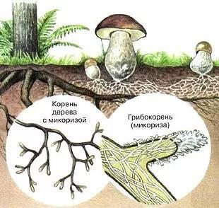 Топ 10 самых хищных растений и грибов в мире | рутвет - найдёт ответ!