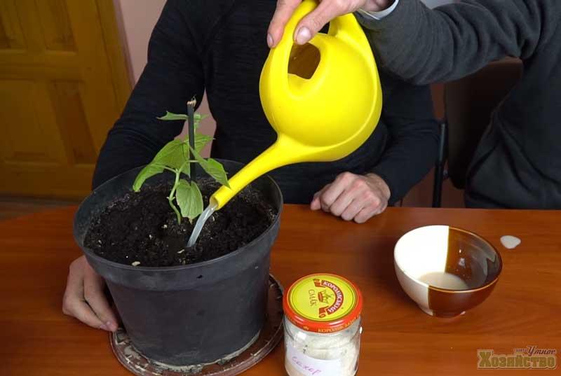 Дрожжевая подкормка для растений: рецепт приготовления и способ применения