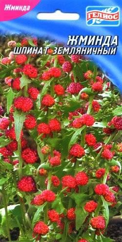 Земляничный шпинат уход и выращивание из семян — выбор сорта и пошаговая инструкция