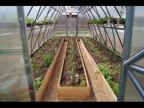 Посадка рассады помидоров для теплицы: как правильно выращивать