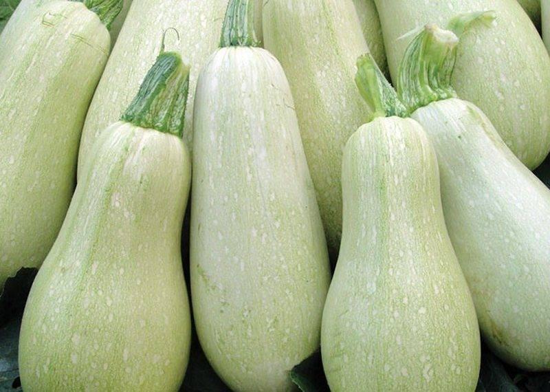 Семена кабачок якорь, 2,0г, гавриш, белые пакеты