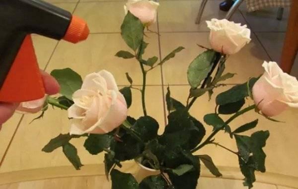 Как сохранить розы в вазе дольше всего: простые методы и отзывы