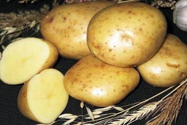"""Картофель колобок - описание сорта, фото, отзывы, посадка и уход - журнал """"совхозик"""""""
