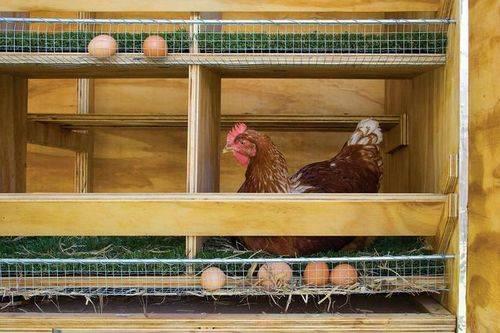 Чертеж гнезда для кур-несушек с яйцесборником своими руками. как сделать гнезда для кур несушек с яйцесборником? | дачная жизнь