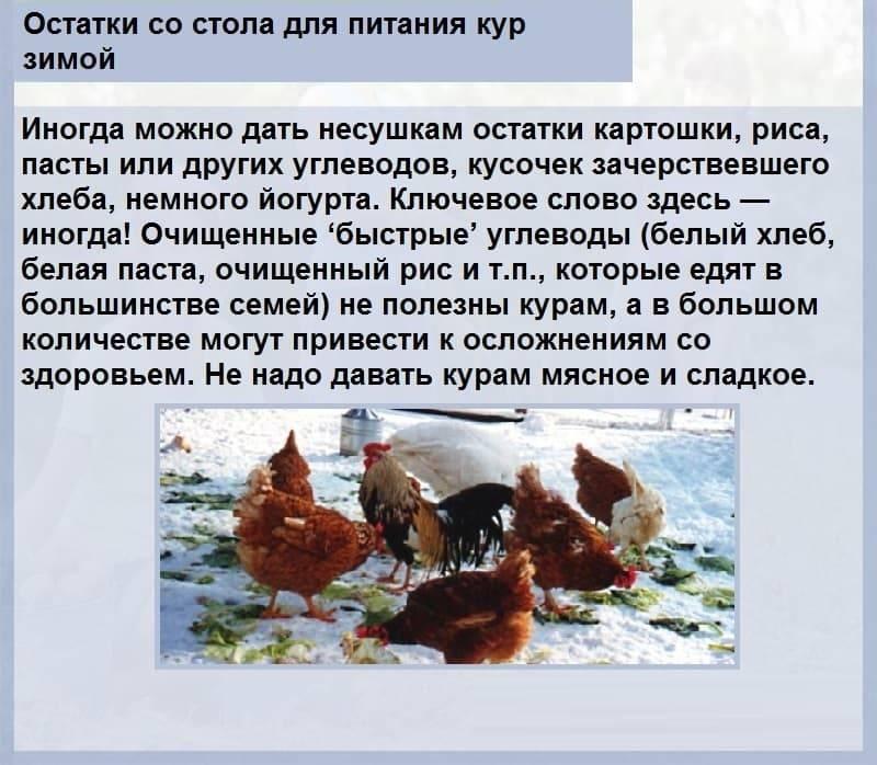 Чем кормить кур зимой, чтобы хорошо неслись?