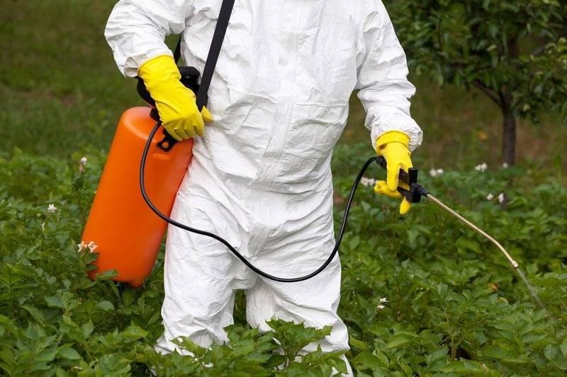 Фитоспорин для рассады томатов | огородовед