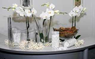 Как ухаживать за орхидеей в колбе и сохранить срезанные цветоносы в пробирке или стеклянной вазе?
