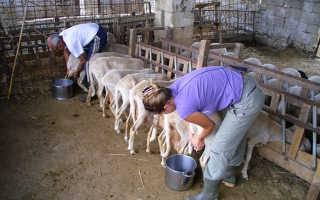 Большая статья ученых из гарварда о молоке - medical insider
