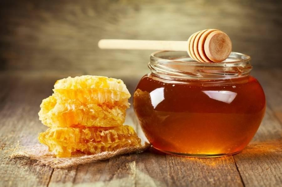 Мед с Молочая — польза и вред, как отличить подделку