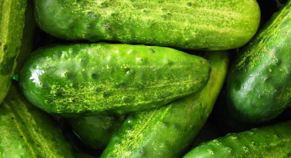 Характеристика и описание сорта огурца марьина роща, его урожайность