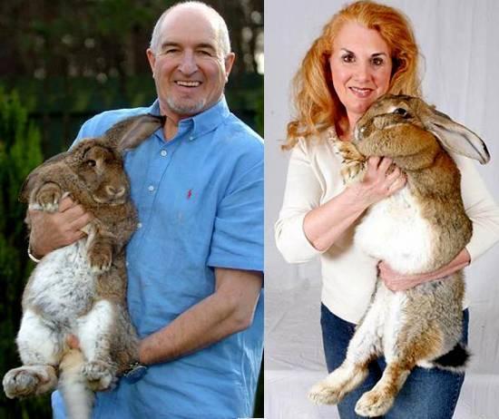 Все о карликовых кроликах