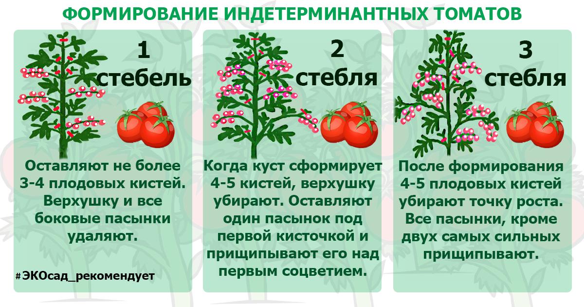 Пасынкование и прищипывание помидоров в теплице