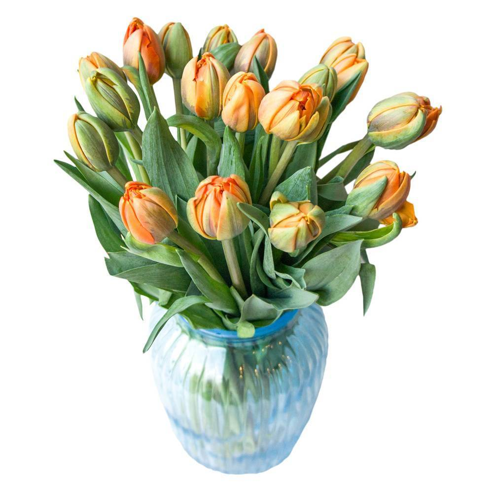 Фото пионовидных тюльпанов, букет из пионов и сортов тюльпанов как пионы на фото. | фото цветов