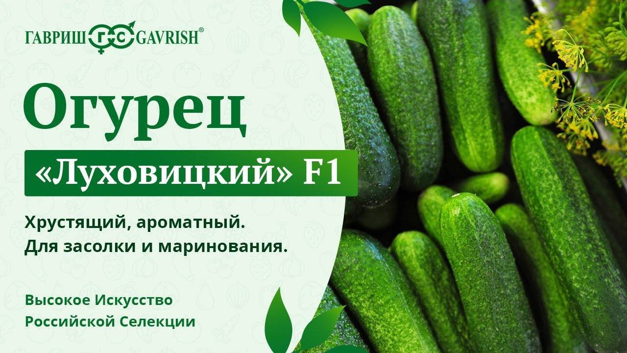 Сорт огурца луховицкий: выращивание, посадка и уход, фото