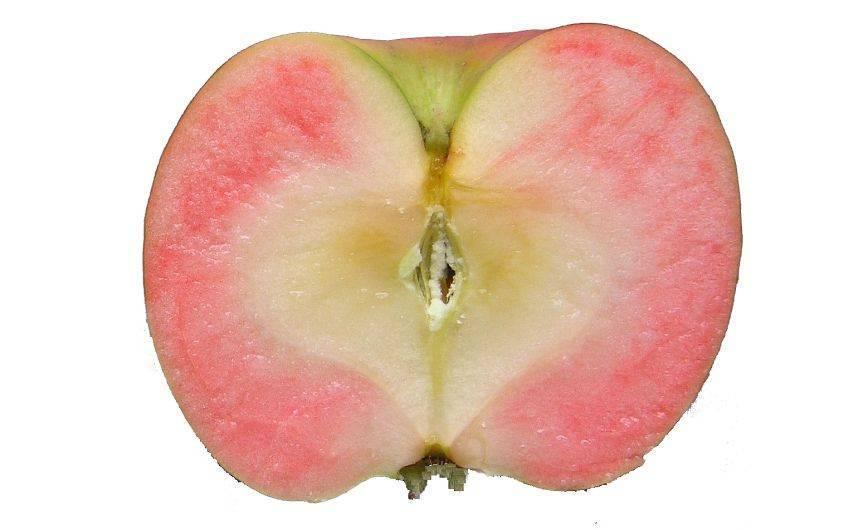 Характеристика яблок розовый жемчуг - медоносы | описание, советы, отзывы, фото и видео