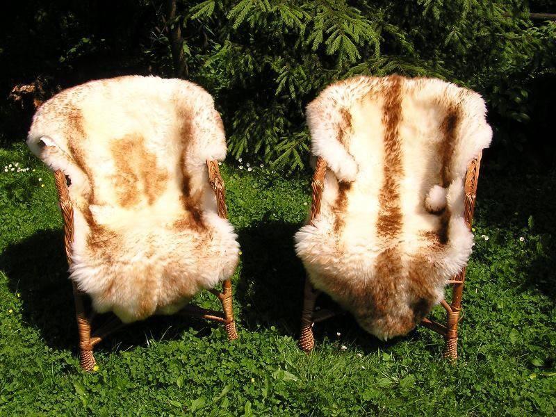 Выделка в домашних условиях овечьей шкуры: первичная обработка, вычинка и переработка