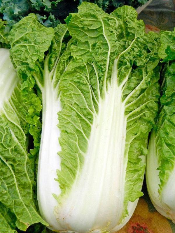 Пекинская капуста - польза для похудения, калорийность, свойства и диетические рецепты