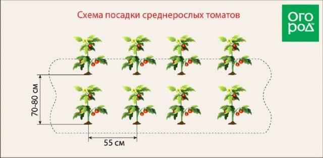 На каком расстоянии сажать кабачки в открытый грунт: схема