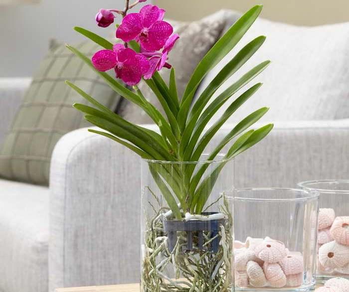 Уход за орхидеей после покупки: адаптация в домашних условиях и что с ней нужно делать сразу после магазина, когда поливать первый раз и как ухаживать