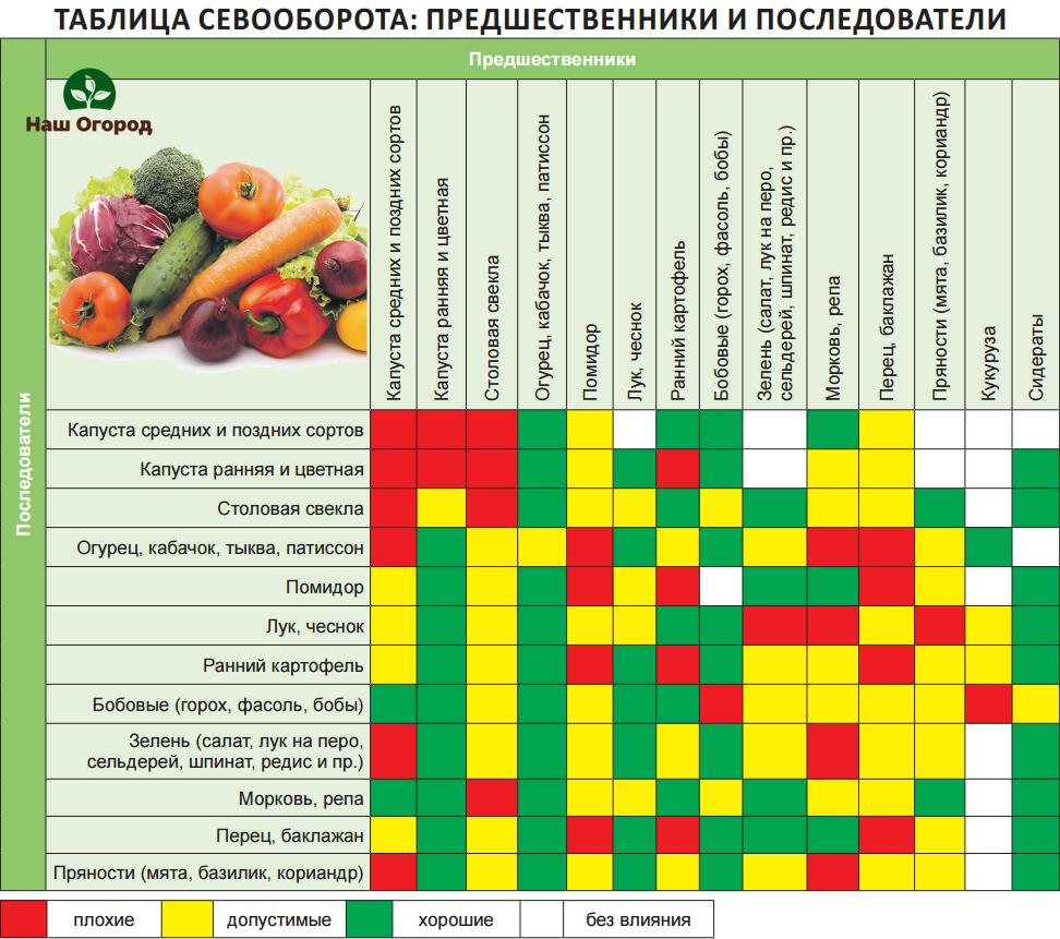 Овощной севооборот культур: таблица, система, проектирование чередования на дачном участке